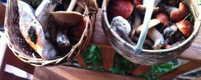 Выбираем грибы по правилам